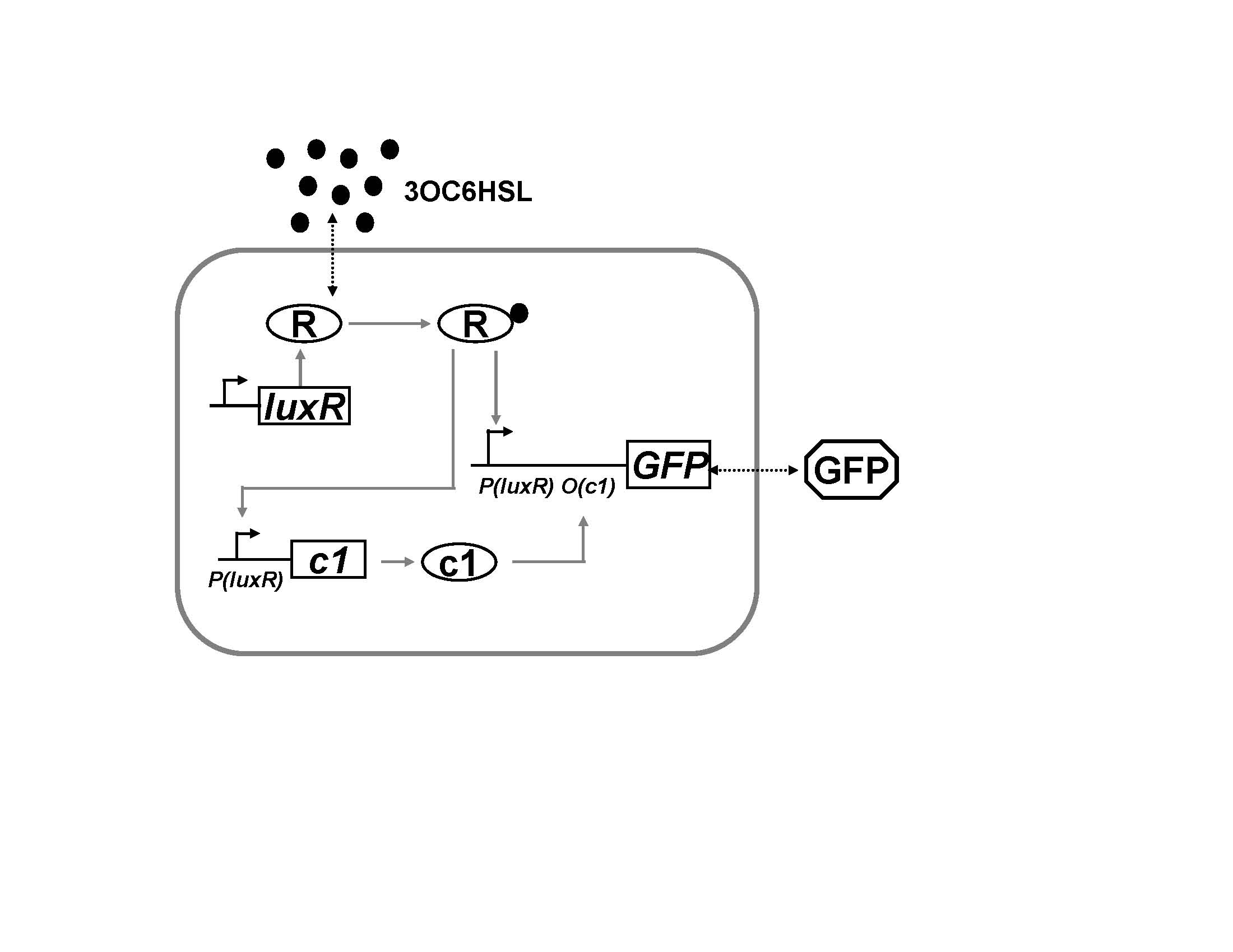 Erics Research Notchfilter Filtercircuit Basiccircuit Circuit Diagram Design For The Bandpass Filter External Signal Acyl Homoserine Lactone Or Ahl Diffuses Freely Into Cell Where It Binds To Luxr R Form